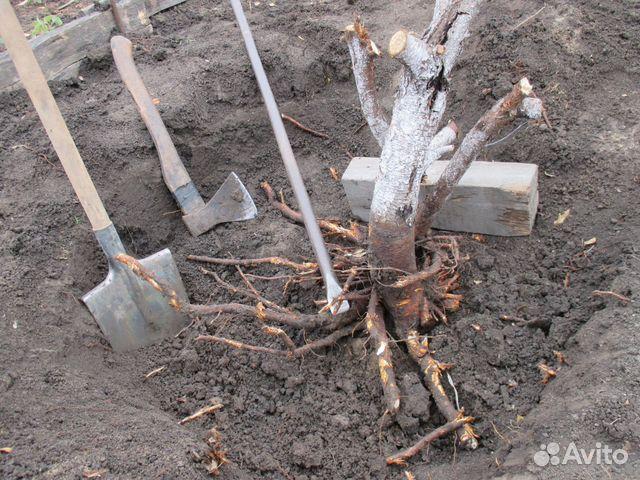 Услуги - Корчевание деревьев, удаление пней, дачи и сады в Омской области предложение и поиск услуг на Avito - Объявления на сай