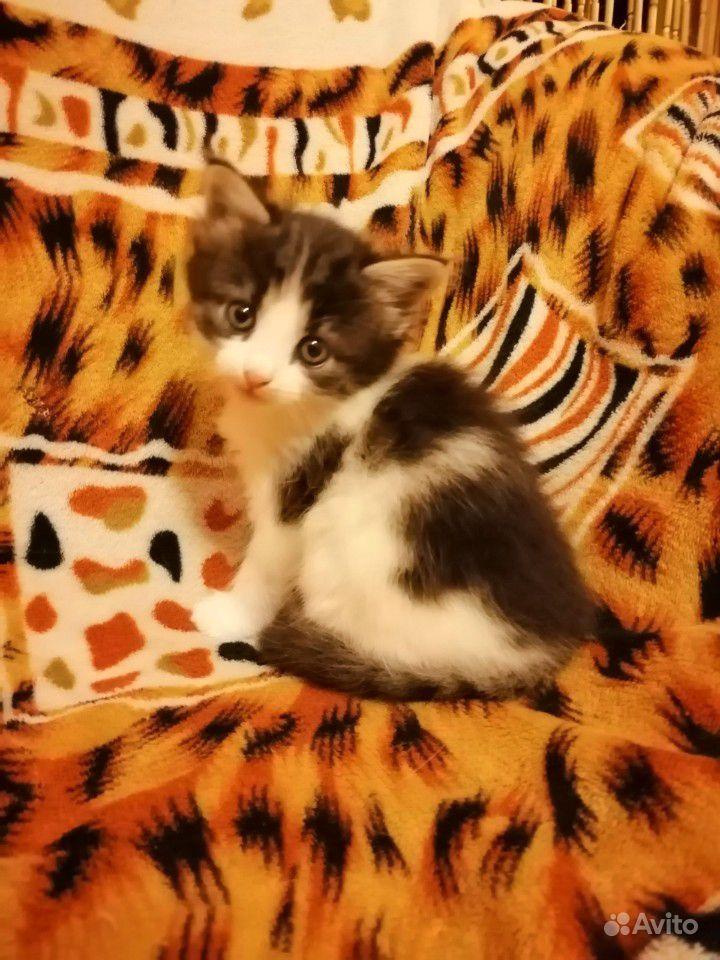 Миленький и ласковый мальчик - котик ищет дом