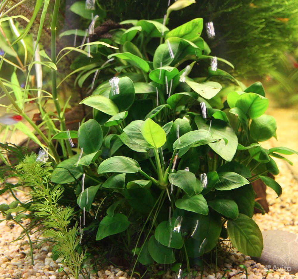 Аквариумные растения и креветки