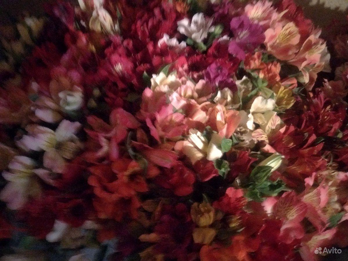 Цветы свежие альстромерия купить на Зозу.ру - фотография № 5