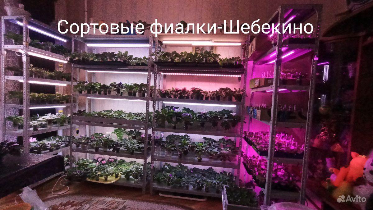 Сортовые фиалки- свежесрезанные листики, детки, ст купить на Зозу.ру - фотография № 1