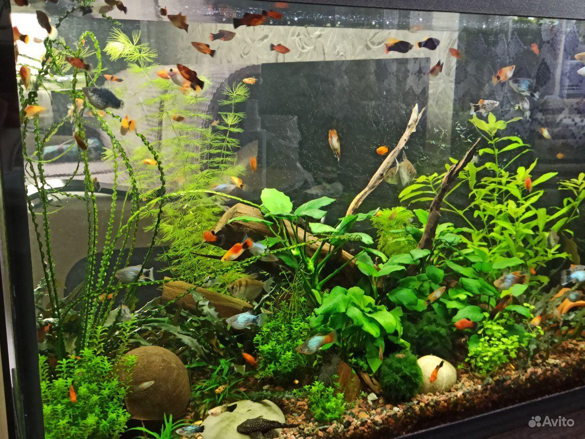Лампа для аквариума nicrew купить на Зозу.ру - фотография № 3