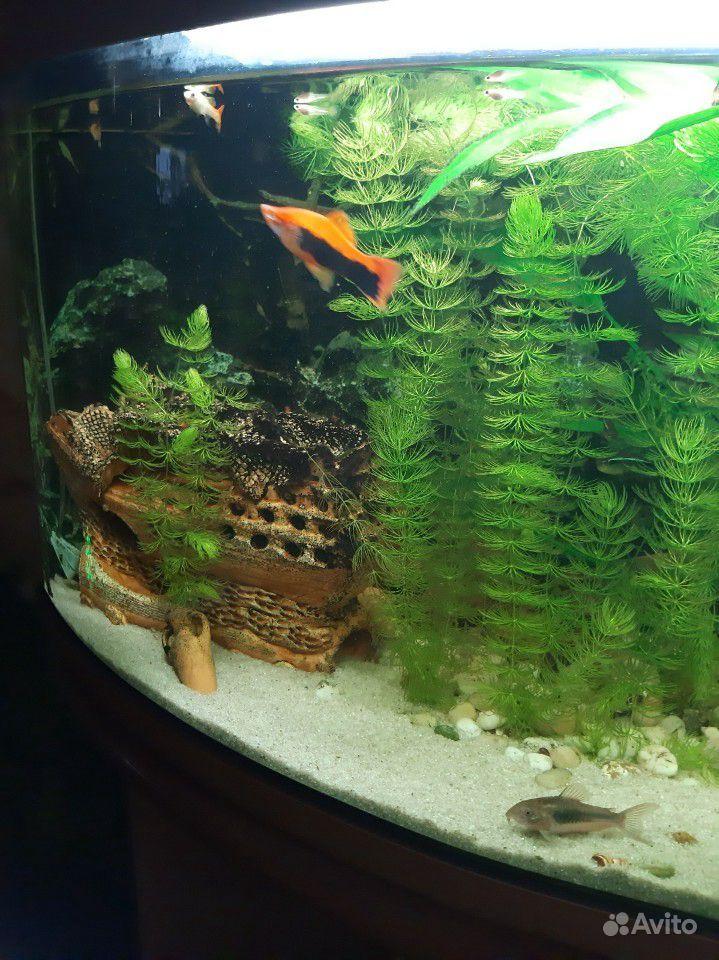 Аквариум с рыбками и тумбой купить на Зозу.ру - фотография № 2