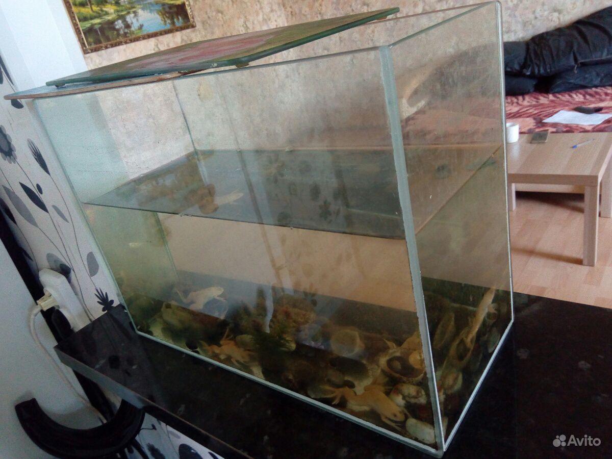 Аквариум со шпорцевыми лягушками купить на Зозу.ру - фотография № 2