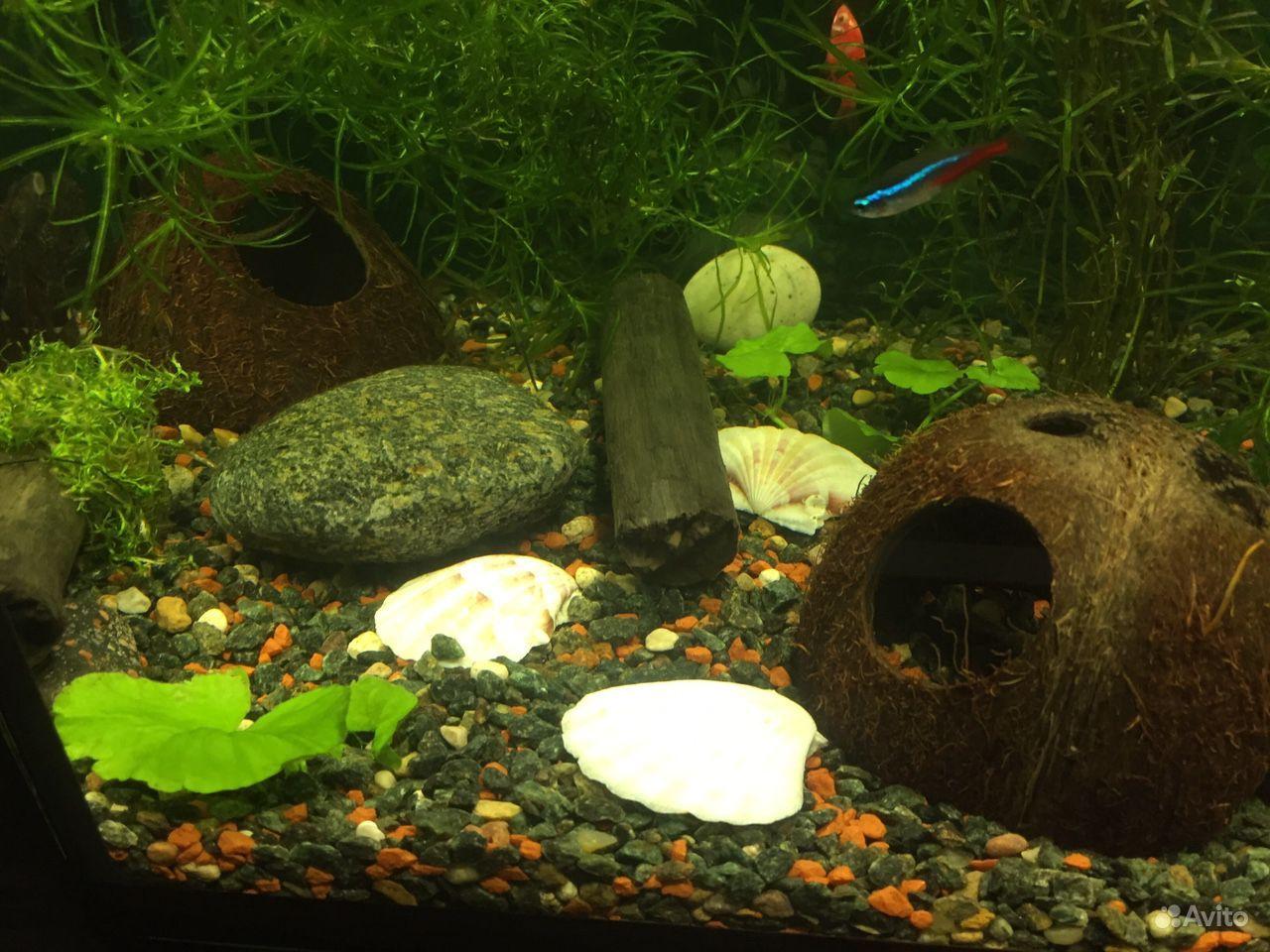 Декорации для аквариума купить на Зозу.ру - фотография № 3