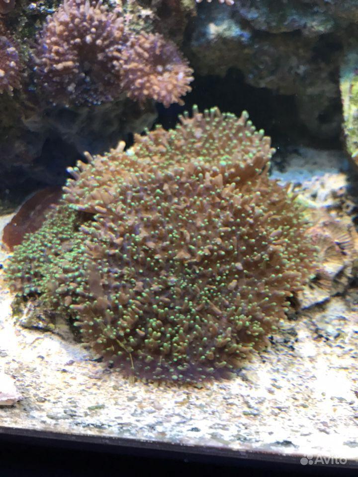 Кораллы купить на Зозу.ру - фотография № 1