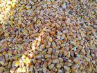 Продаём кукурузу кормовую, любой объём. Куркачи