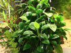 Аквариумные растения, креветки и рыбки