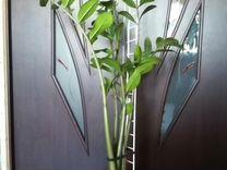Замиокулькас — Растения в Рязани