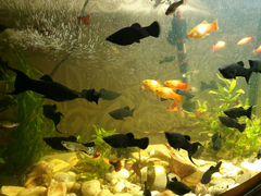 Рыбки Моллинезии
