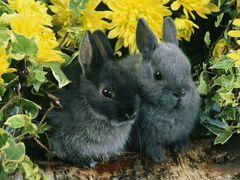 Кролики 3мес