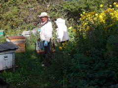 Пчелы семья