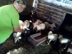Бараны овцы