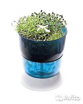 Проращиватель микрозелени