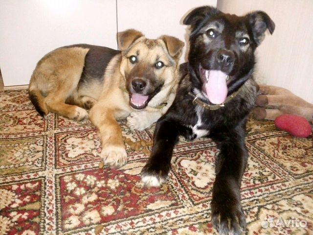 Подать объявление о щенках в самаре частные объявления о продаже жилья в мариуполе
