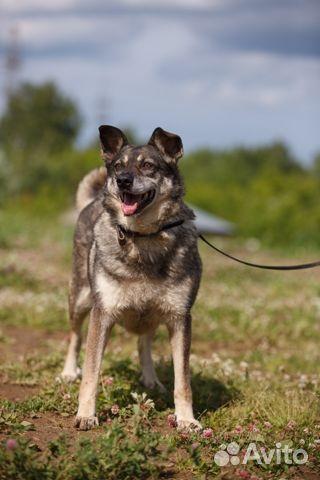 Собака Лемура в добрые руки купить на Зозу.ру - фотография № 2