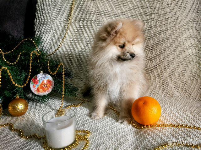 Фото двухмесячного щенка