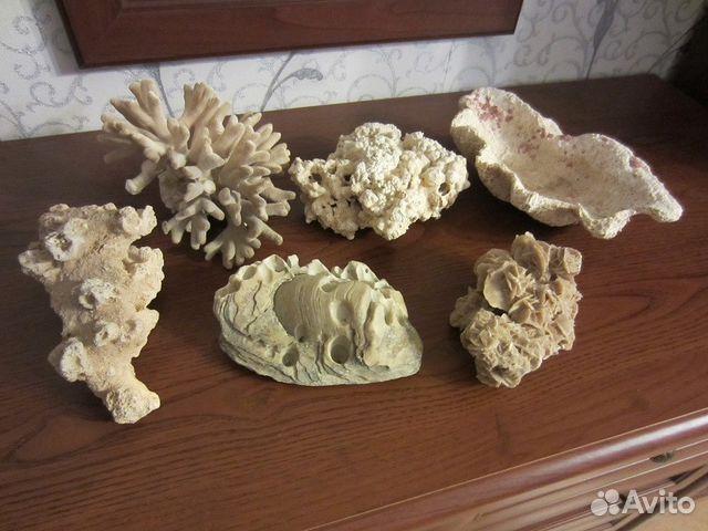 607d26953fae Ракушка и кораллы | Festima.Ru - Мониторинг объявлений