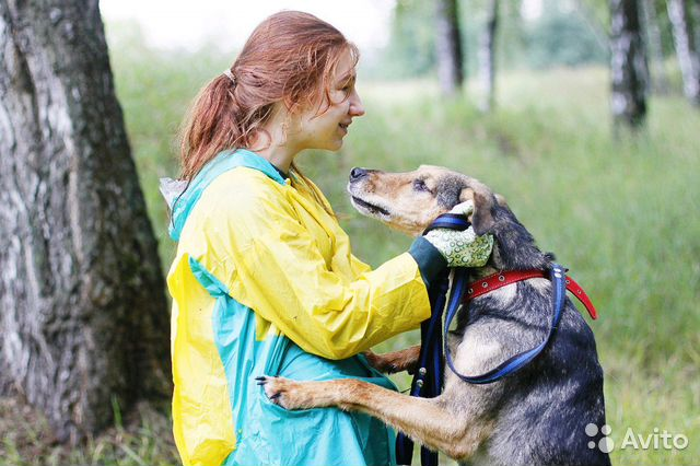 Отдам в добрые руки собаку Стенли купить на Зозу.ру - фотография № 4