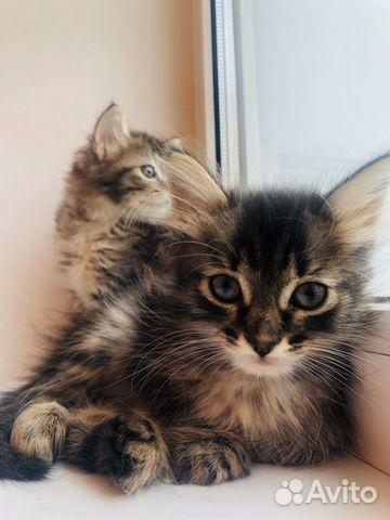 Малыши котята