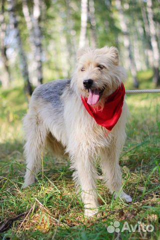 Собака неженка Иви в добрые руки купить на Зозу.ру - фотография № 1