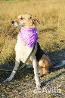 Необыкновенная собака в дар купить на Зозу.ру - фотография № 3