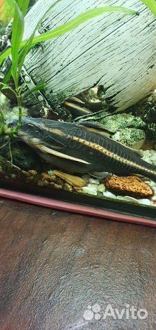 Рыбки аквариумные 89118444414 купить 6