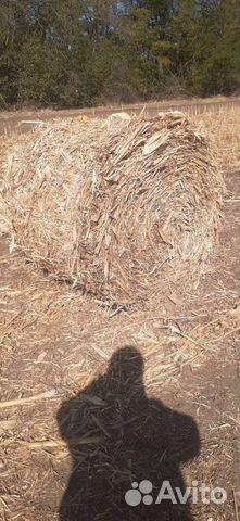 Кукуруза в рулонах  89887338078 купить 1