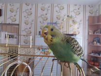 Волнистые попугаи редких окрасов