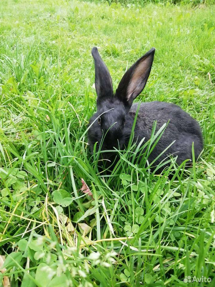 Кролики  89997865033 купить 2