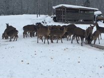 Охотничий вольер-ранчо