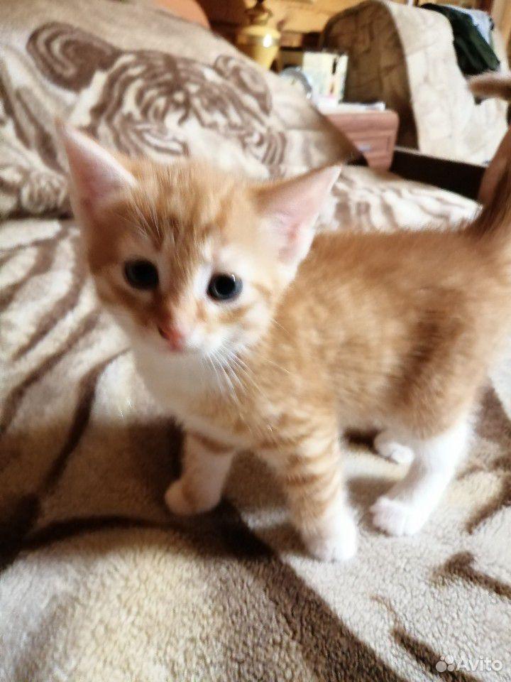Котенок(кот)  89040015219 купить 3