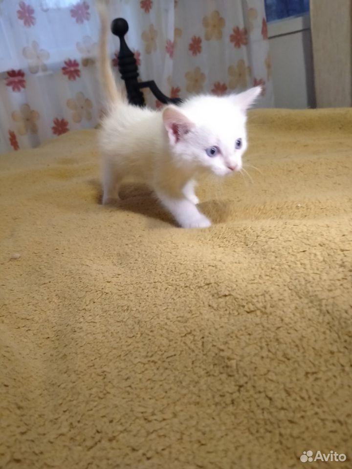 Отдам миленьких котят  89039946144 купить 2