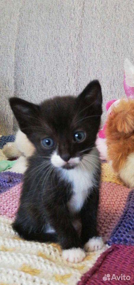 Кошка  89069659525 купить 1