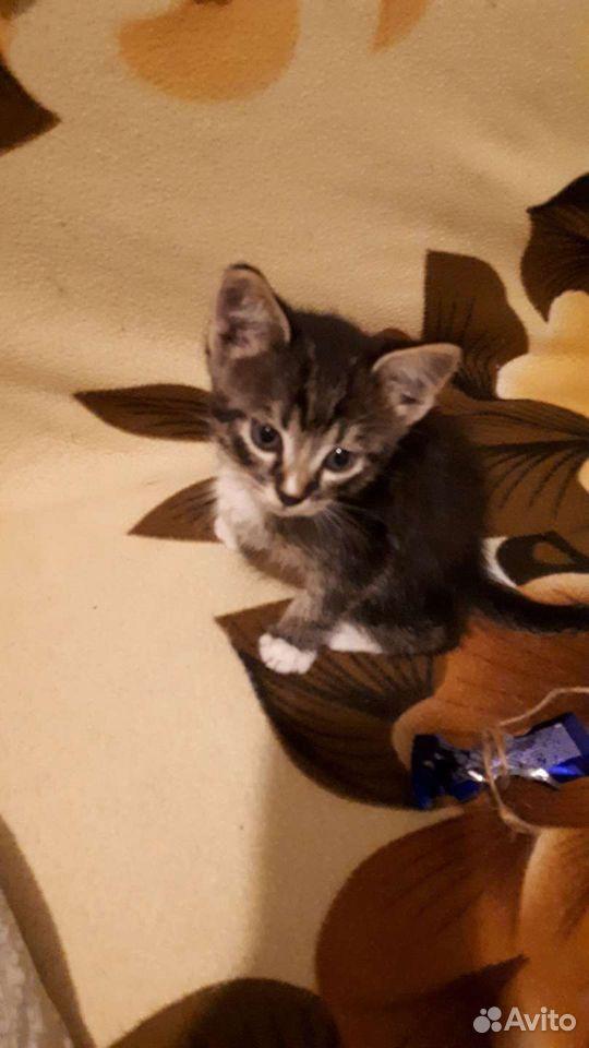 Kitty  89532846766 buy 1