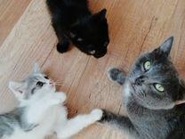 Отдам милых котиков