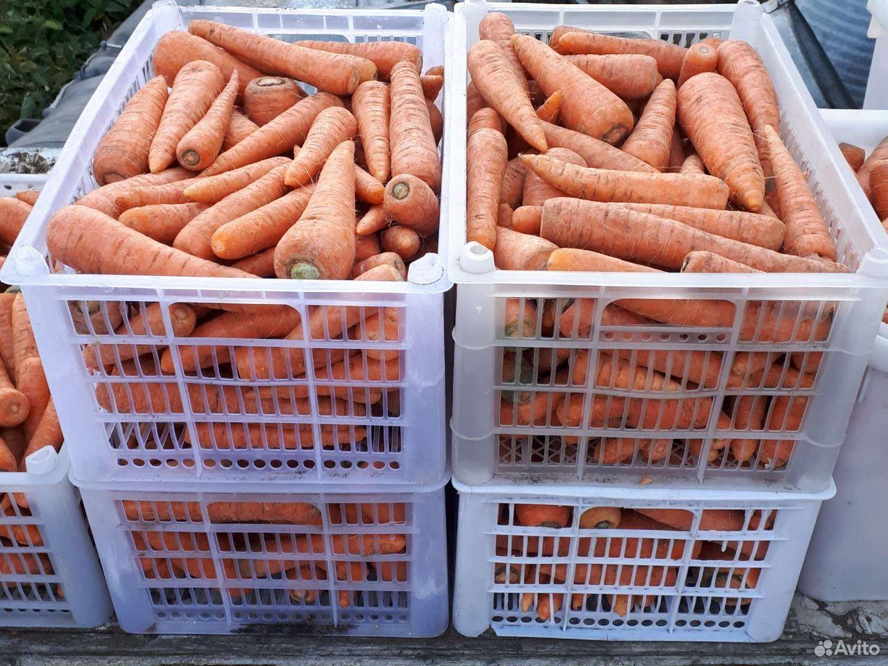 Морковь, свекла  89246965601 купить 2