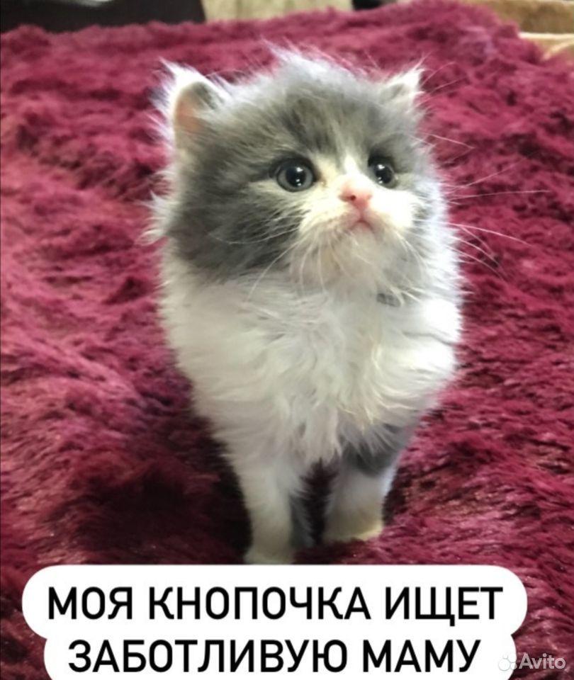 Котенок  89298600358 купить 1