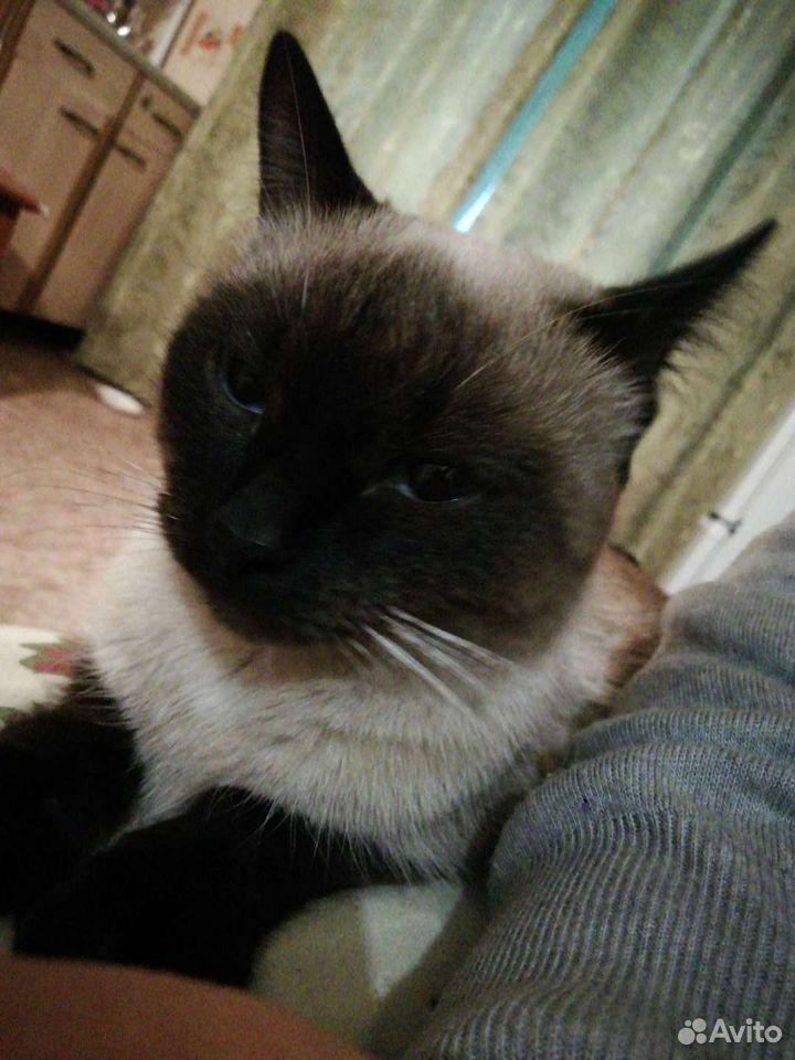 Кошка с лотком
