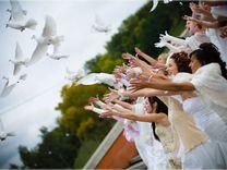 Голуби на Выпускной, на Свадьбу, подарок