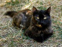 Стерилизованная Матильда в добрые руки — Кошки в Геленджике