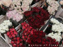 Роза импорт Эквадор
