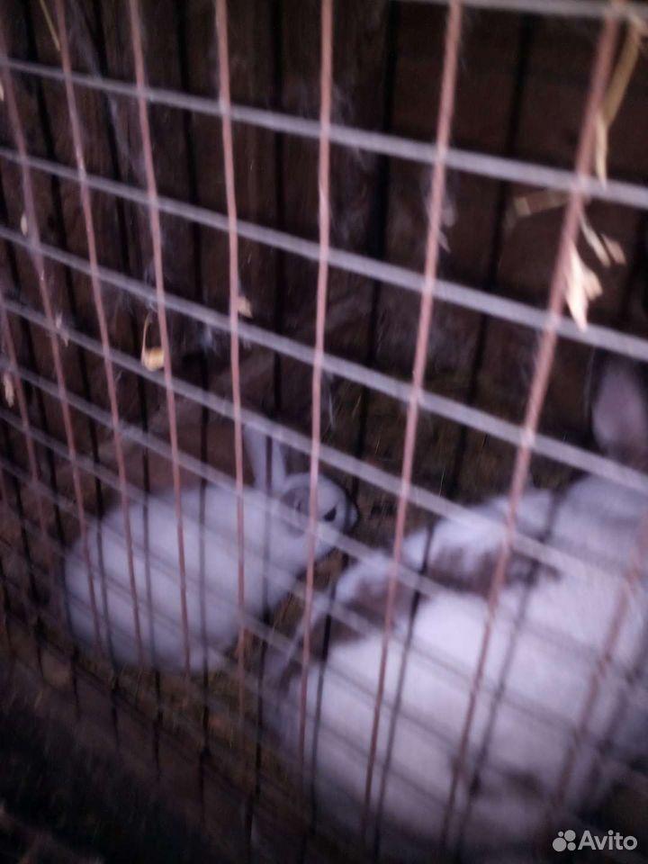 Декоративные кролики  89637917579 купить 2