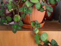 Растения Цветы Комнатные растения