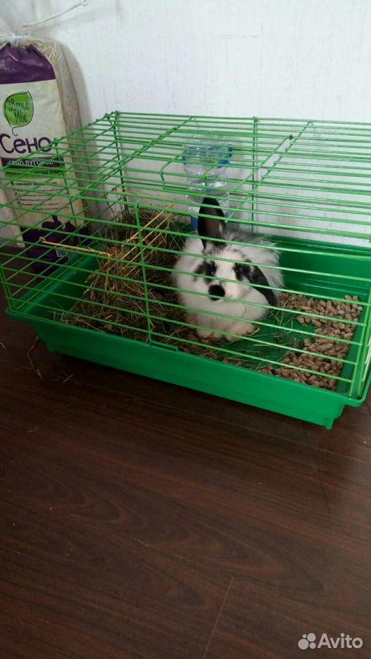 Кролик  89107196111 купить 2